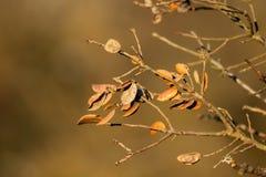 Arbres avec peu de feuilles et sécher environ pour tomber avec le fond brun photo libre de droits
