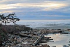 Arbres balayés par le vent silhouettés contre un coucher du soleil nuageux à la plage Photo stock