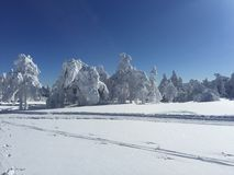 Arbres blancs après la chute de neige Images libres de droits