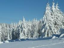 Arbres blancs comme neige dans le paysage d'hiver photographie stock libre de droits