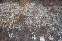 Arbres blancs de l'hiver Photo stock