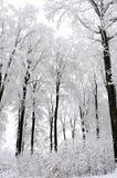Arbres blancs en saison de l'hiver Photographie stock libre de droits