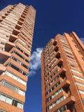 Arbres bleus de ville Photographie stock libre de droits