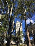 Arbres bleus de ville Photos libres de droits