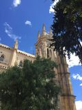 Arbres bleus de ville photos stock