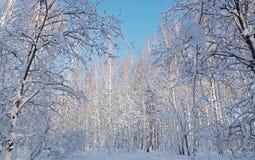 Arbres bloqués par la neige pendant l'hiver Photos stock