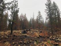 Arbres brûlés dans la forêt Images libres de droits