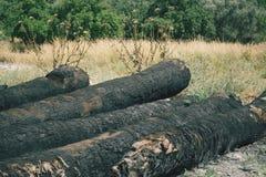 Arbres brûlés après incendie de forêt Photographie stock libre de droits