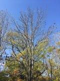 Arbres, branches, ciel bleu Images libres de droits