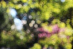 Arbres brouillés, fond, automne Photo libre de droits