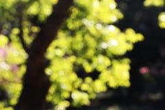 Arbres brouillés, fond, automne Photo stock