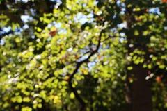 Arbres brouillés, fond, automne Photographie stock libre de droits