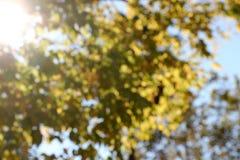 Arbres brouillés, fond, avec le rayon de soleil Photos libres de droits