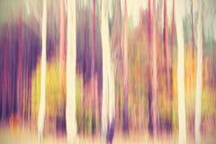 Arbres brouillés par mouvement abstrait dans une forêt Image stock