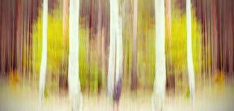 Arbres brouillés par mouvement abstrait dans une forêt Photographie stock