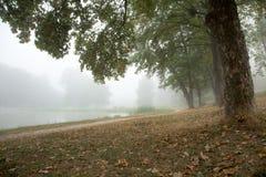 Arbres brumeux en parc photographie stock