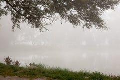 Arbres brumeux en parc images stock