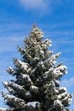 Arbres canadiens pendant l'hiver Photo libre de droits