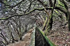 Arbres cerclés à l'itinéraire de 25 Fontes en la Madère Images libres de droits