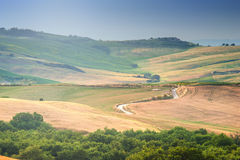 Arbres, champs et atmosphère en Toscane, Italie Photos stock