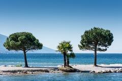 Arbres chez Lago di Garda Lakefront photo stock