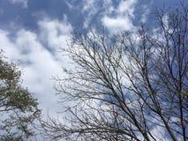 Arbres, ciel bleu Automne tôt, branches nues Photographie stock libre de droits