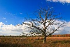 arbres colorés d'arbre de lames de morts d'automne Image libre de droits