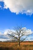 arbres colorés d'arbre de lames de morts d'automne Photo stock