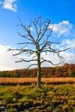arbres colorés d'arbre de lames de morts d'automne Images stock
