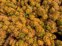 Arbres colorés d'automne Photographie stock