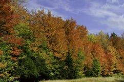 Arbres colorés d'automne images stock