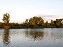 Arbres colorés d'automne ou d'été sur le côté de rivière image libre de droits