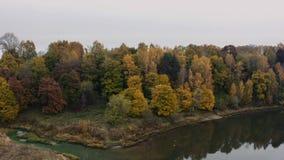 Arbres colorés d'automne sur la côte d'une rivière de forêt clips vidéos