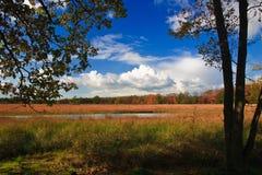 arbres colorés de lames d'automne Image stock