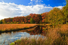arbres colorés de lames d'automne Photographie stock
