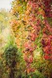 Arbres colorés de paysage d'automne beaux au-dessus de la rivière, rougeoyant au soleil fond pittoresque merveilleux Couleur en n images libres de droits