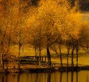 Arbres colorés de paysage d'automne beaux au-dessus de la rivière, rougeoyant au soleil fond pittoresque merveilleux Couleur en n photos libres de droits