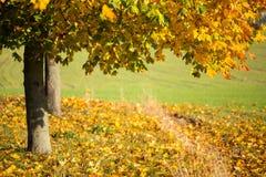 Arbres colorés en automne Photographie stock
