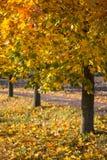 Arbres colorés en automne Photographie stock libre de droits
