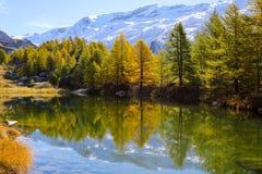 Arbres colorés en automne au lac Grindjisee, Zermatt, Suisse Images stock