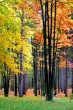 Arbres colorés lumineux Images stock
