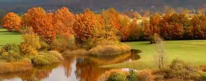 Arbres colorés par automne Photographie stock