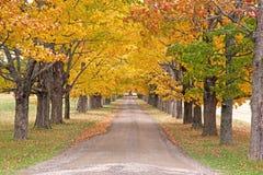 Arbres colorés par automne sur un long chemin image libre de droits