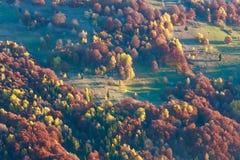 Arbres colorés sur la pente en automne carpathien photo libre de droits