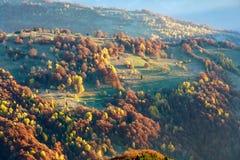 Arbres colorés sur la pente en automne carpathien image stock