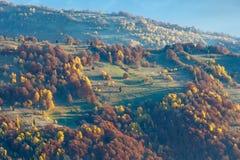 Arbres colorés sur la pente en automne carpathien photographie stock libre de droits