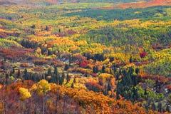 Arbres colorés d'automne Images libres de droits