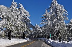 Arbres complètement de neige Photographie stock libre de droits