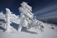 Arbres congelés Photo stock