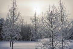 Arbres congelés dans la forêt image stock